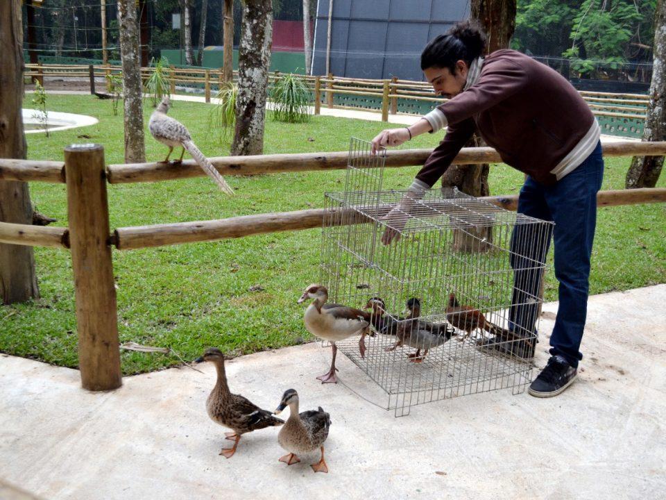 Recinto de Imersão do Zoo Volta Redonda recebe primeiros animais